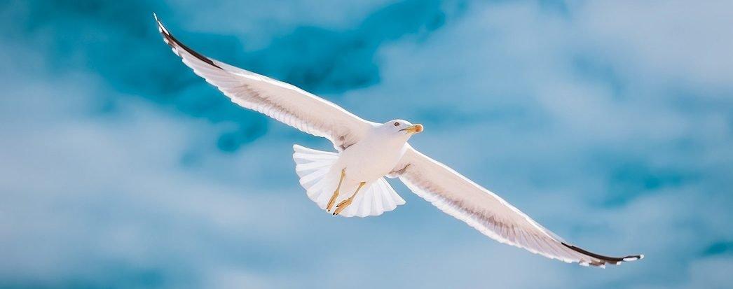 elegal_abril_passaro_voar_mgra